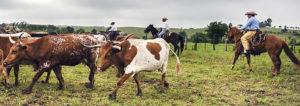 cowboy history slider